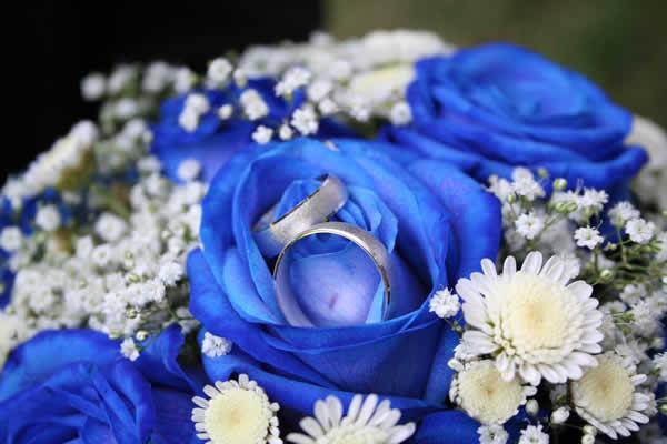 coussins-alliance-fleurs-alliances